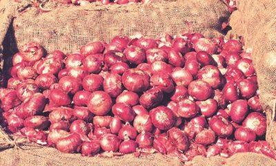 onion prices