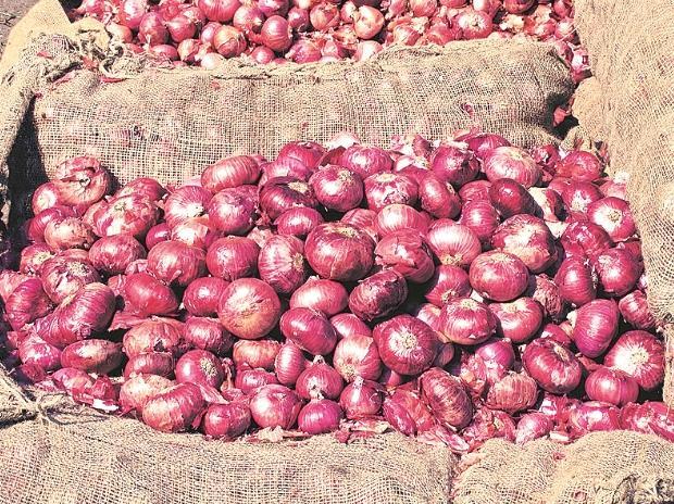 onions, onion price, onion