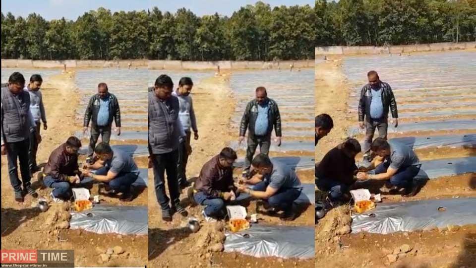 dhoni-in-farming