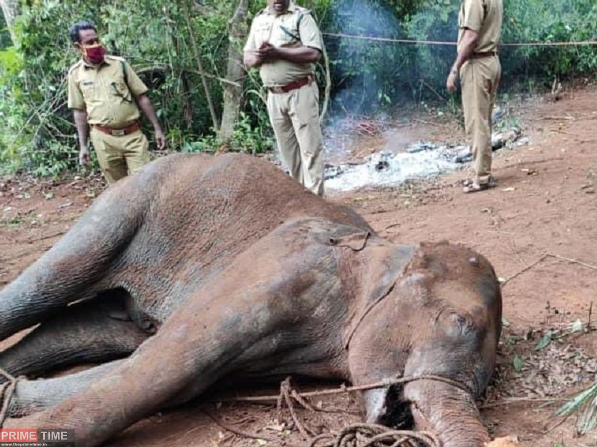 Pregnant Elephant Died in Kerala 2020