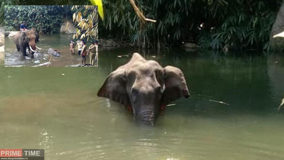 pregnant-elephant-death-rea