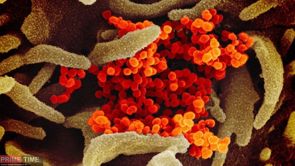 who searching root of coronavirus